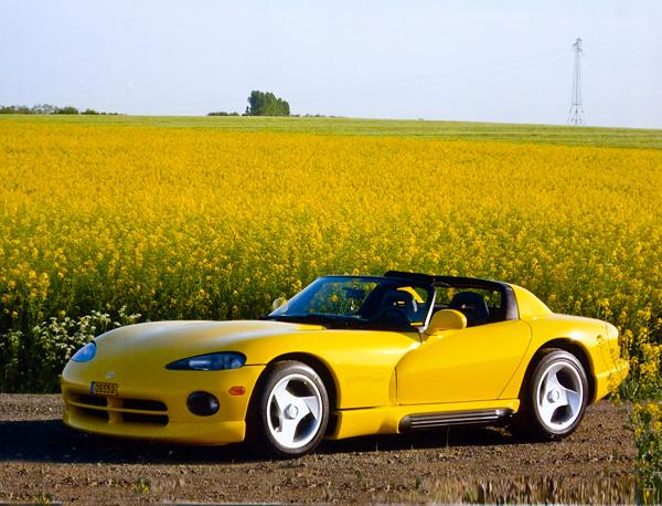 yellow_viper_luxembourg.jpg